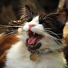 Whats So Funny Ollie? by Kerensa Davies