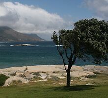 Windswept tree, Kempston, Cape Town by Malcolm  Maggs