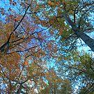 Autumn Colour by Chris Vincent