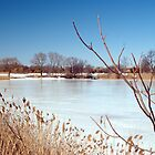 Frozen Pond by SPPhotography