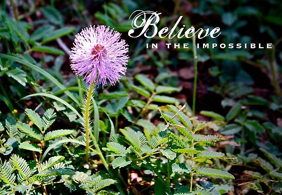 Believe In The Impossible by Franchesca Cox