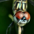 Dragonfly by Dennis Stewart