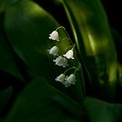 Lily of the Valley by Maryna Gumenyuk