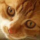 Big Eyed Kitten by kipstar