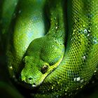 Green Tree Snake by Liza Yorkston