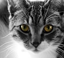 Black and white with Green eyes Cat by kipstar