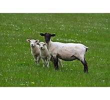 Here's looking at ewe! Photographic Print