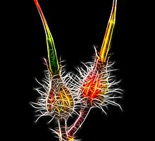 Fractalius Buds by Nigel Butterfield
