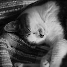 Sleeping Cat by Danielle  La Valle