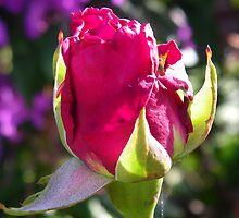 Rosebud 03 by LoneAngel