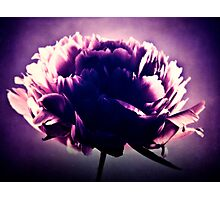 Peony Petals Photographic Print