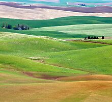 Nestled In The Rolling Hills. by Todd Rollins