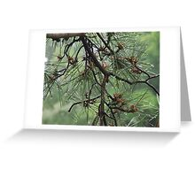 Pine Cluster Greeting Card