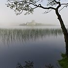 Misty morning, Loch Awe by Gary Eason + Flight Artworks