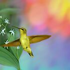 Hummingbird in Flight by Maria Elena  Black