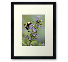 Blue Ajuga -- Bumble Bee Framed Print