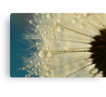 Dandelion with Blue Canvas Print