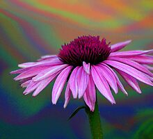 Coneflower on Acid by Eileen McVey