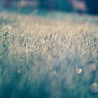 Close up of grass in vivid colors by netza