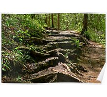 A Path in the Woods Poster
