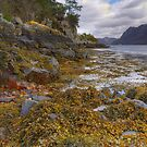 Plockton Shore (2) by Karl Williams