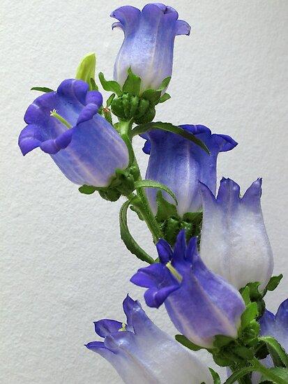 Purple Blossums by Glenn Cecero