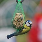 Blue Tit Hangin ' Out by relayer51