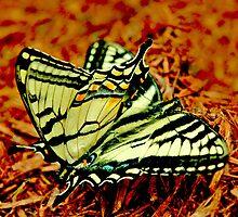 Butterfly Matting by Danielle Girouard