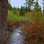 Nature's serenity by MarthaBurns