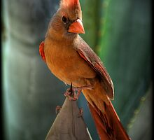The Cardinal  by Saija  Lehtonen