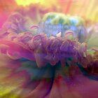 carnival of flower by Anne Seltmann