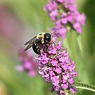 The Pollinator! by rasnidreamer