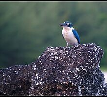 KingFisher by Janone