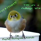 Top 10 Challenge Winner Banner - Silvereye - NZ by AndreaEL