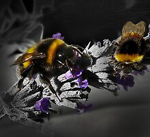Bumble again by Josie Jackson