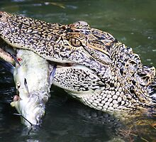 Gator with his Cat Fish by Paulette1021