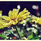 Sunshine Droplets by lisabella