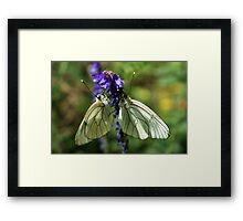 Black-veined Whites Framed Print