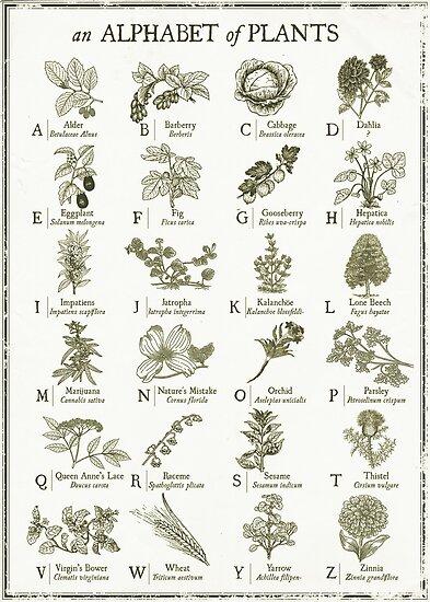 alphabetter - plants by kingslip