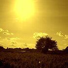 Sunny Side Up by Mounty