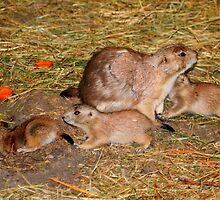 Prairie Dog Family by Larry Trupp