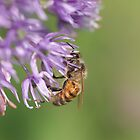 Busy as a Bee by KatMagic Photography