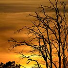 Dead Tree Sunset by Mully410