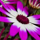 Two toned flower by Courtneystarr