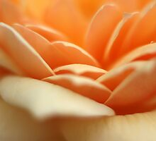 Apricot Waves by Aileen David