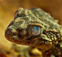 Rough Knob - Tailed Gecko by Bernie Rosser