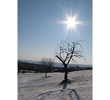 A Frozen Tree in the Rays of the Sun Photographic Print