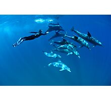 Playful dolphins Photographic Print