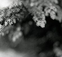 Sub Rosa by Alysia Trackim