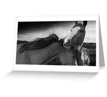 Horses (21-18) Greeting Card